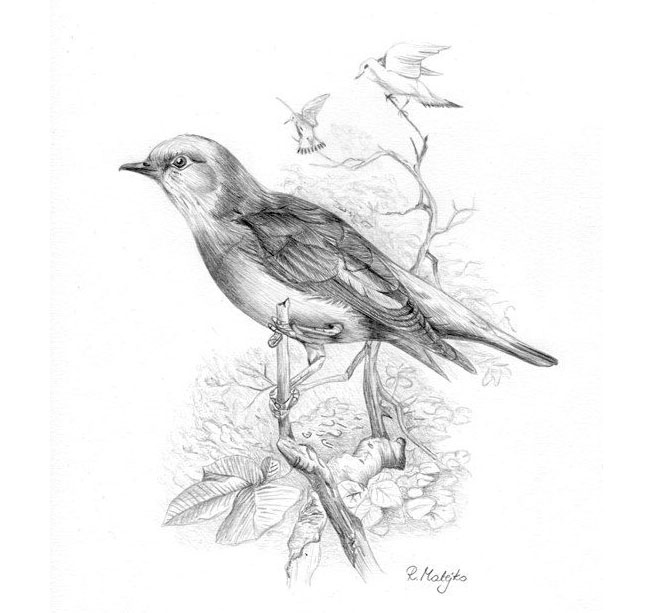 These Bird Sketches Will Make Your Heart Soar! - Animal Salvation