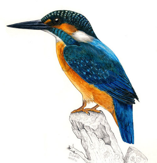 These Bird Sketches Will Make Your Heart Soar Animal