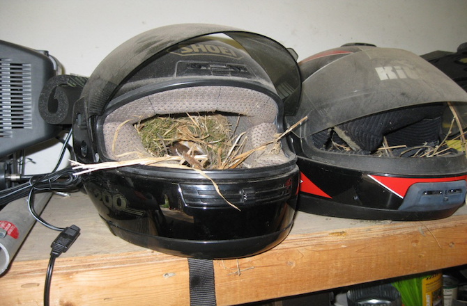 6-nest-motorcyclehelmets