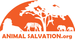 Animal Salvation