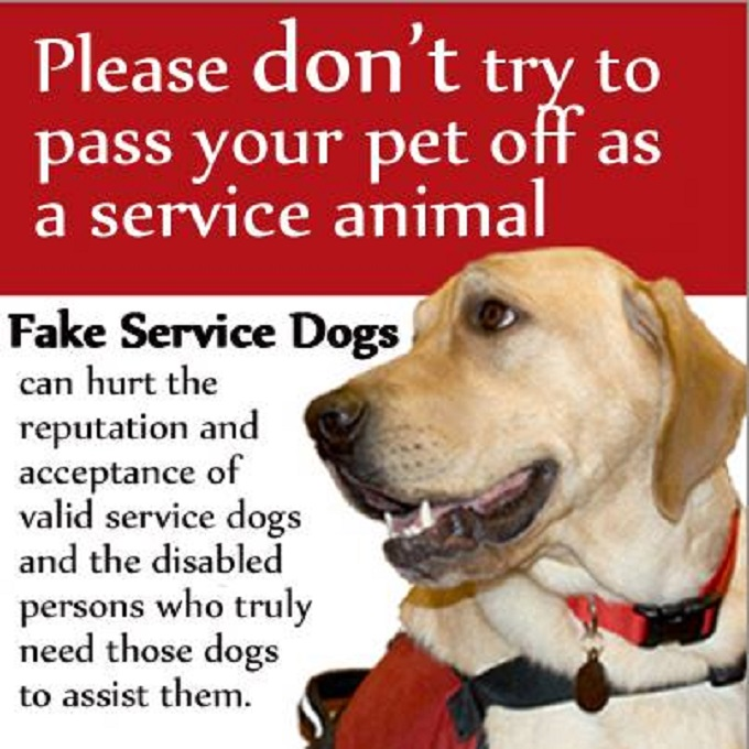 Passing Off Fake Service Dog Becomes A Crime In Florida