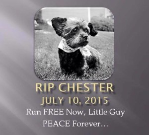 rip-chester